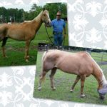 Nay Nay's Peace of Heaven Horse Rescue