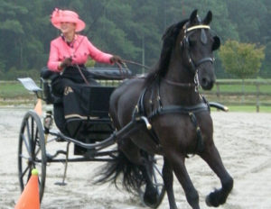 East Coast carriage driving events - Pick Your Route!