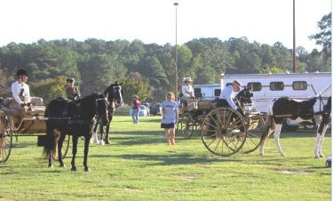 carriage-driving-sunnyside-horse-show-c