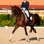 ultimate dressage lessons by video