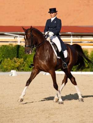 horse and rider executing dressage test