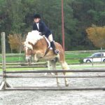 Haflinger horse jumps a fence about 2 ft