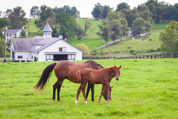 Find local farms and stables near you