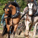 Join East Coast Horses Farm & Business Directory!