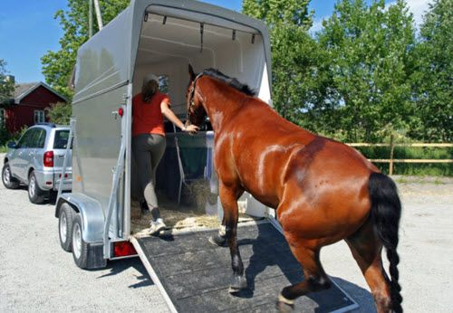 Loading a horse into a bumper pull horse trailer