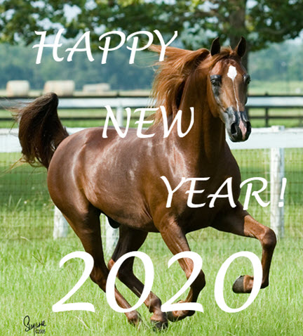 Horse galloping into the 2020 New Year