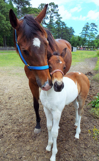 Martin Community Colleges Equine Studies Mare and Foal