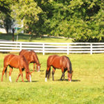 Visit East Coast Horse Farms