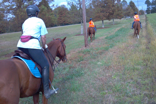 Horse leg protection varies with different aspects trail riding.